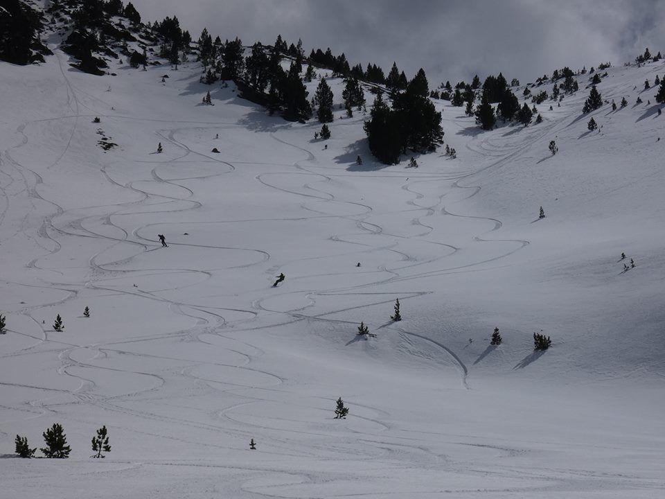 paisaje nevado con árboles y huellas de tablas de splitboard